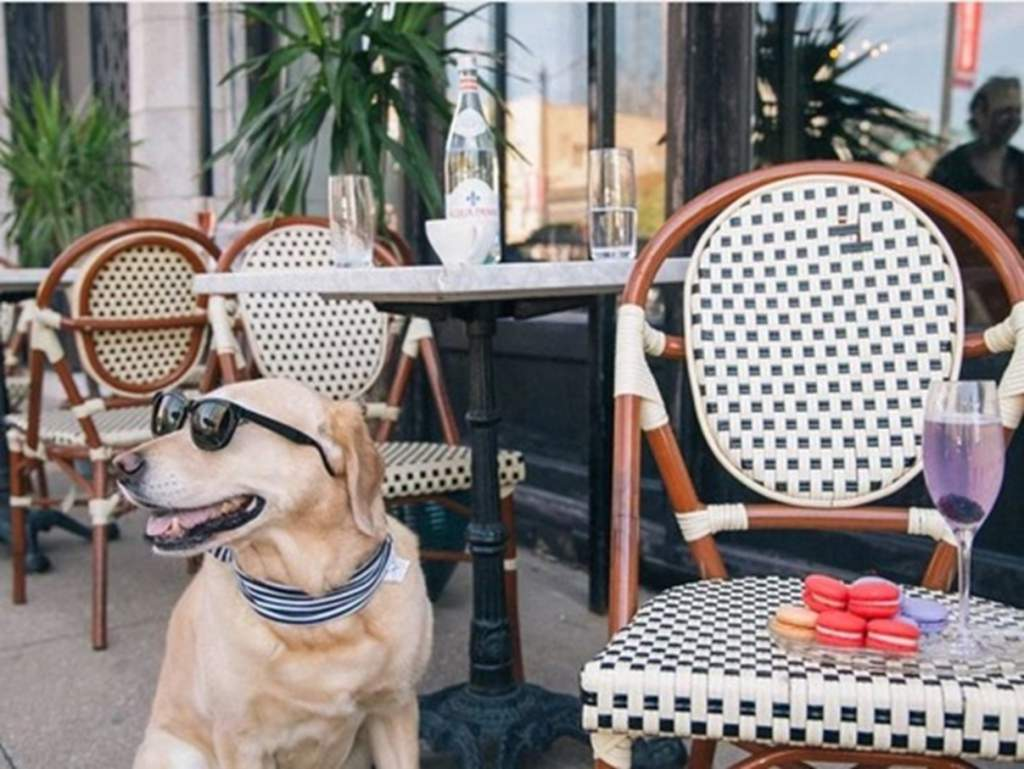 寵物友善餐廳